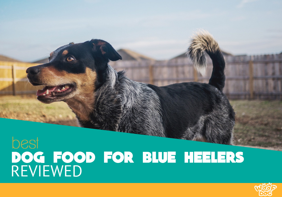 The 7 Best Dog Food For Blue Heelers 2020 Reviews And Ratings