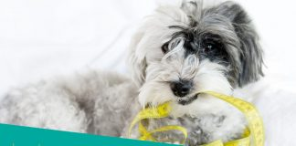 Featured Image of fit dog and tape measure meter