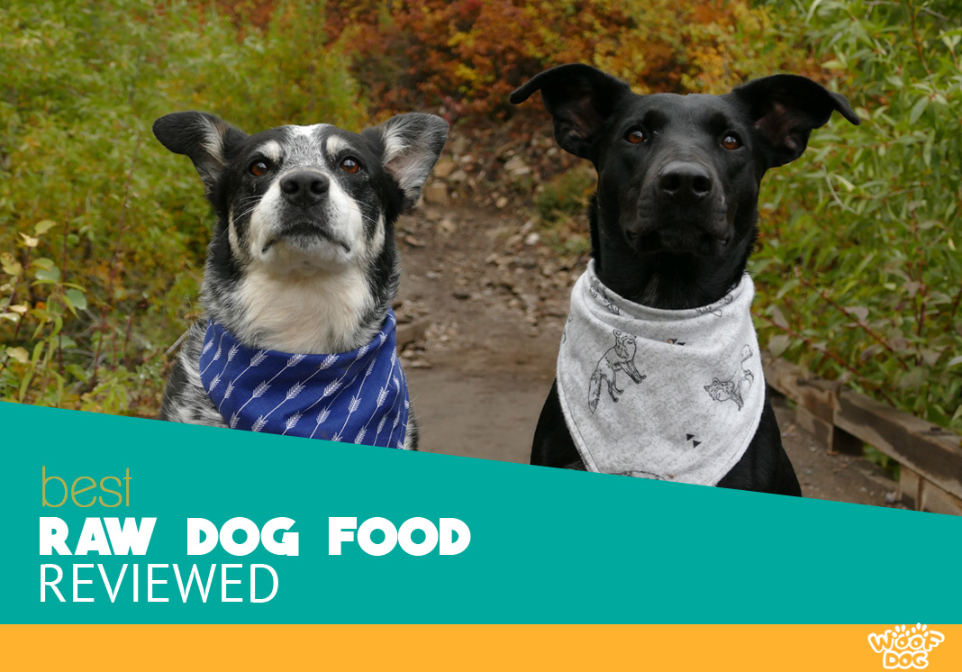 Featured Image of two hungry canine with cool bandanas