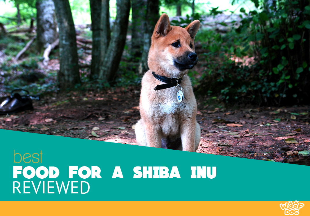 7 Best Food For Shiba Inu Our Reviews