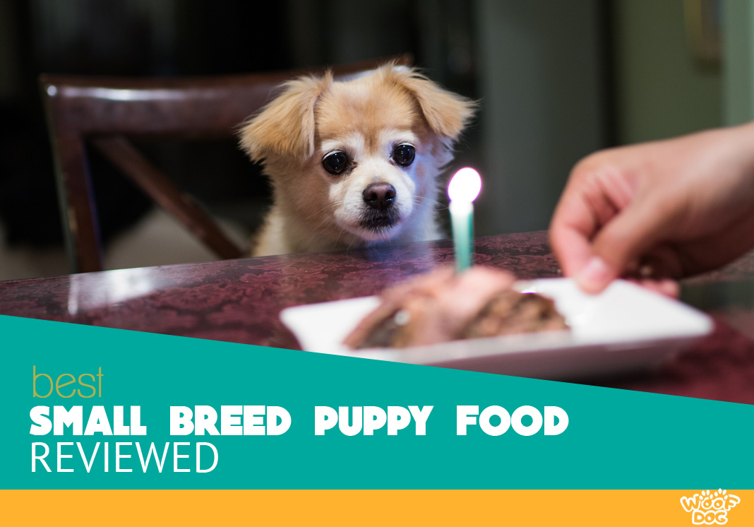 Featured image of adorable puppy and tasty food