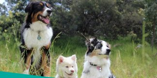 Featured image of beautiful dogs and tall grass
