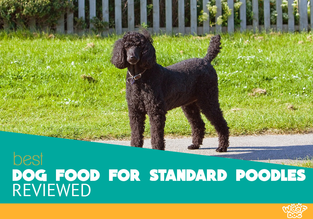 The 7 Best Dog Food For Standard Poodles 2019 Reviews And