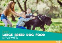 Featured image of large dog and kids