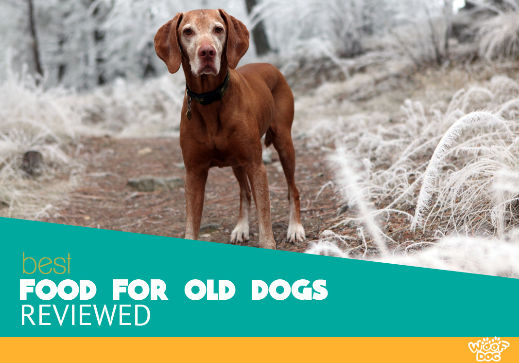Featured image of old canine in the frosty forest