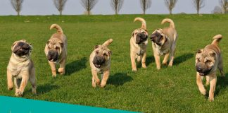 Featured image of six playful dogs