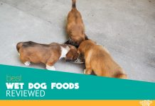 Featured image of three cute hungry puppies eating something