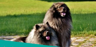 Featured image of two canine with very long hair