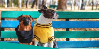 Featured image of two small dogs sitting on blue & green bench
