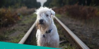 Featured image of white canine sits on the rail