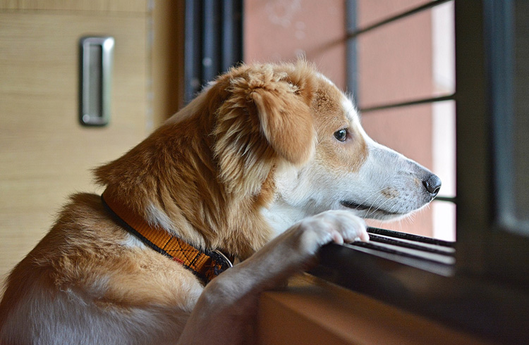 Image of canine beside the closed window