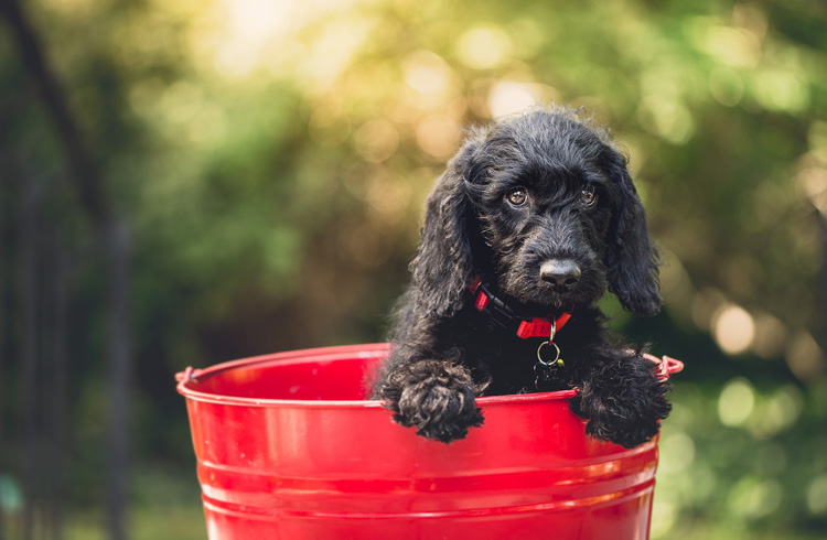 Image of cute doggie in the red bucket