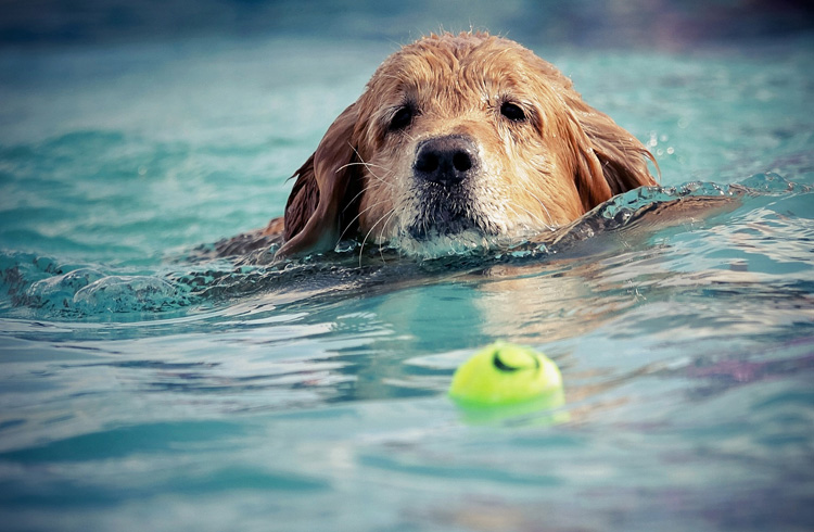 Image of dog in cold water with ball
