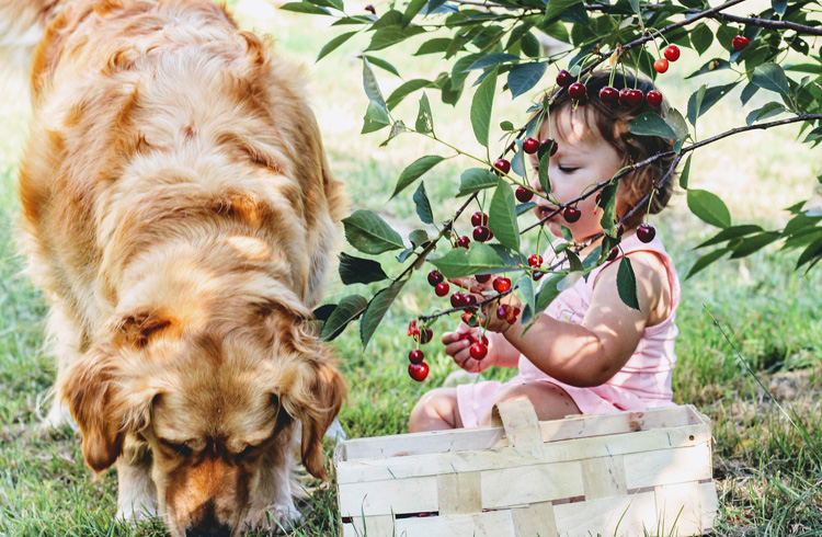 Image of golden dog and little girl in nature