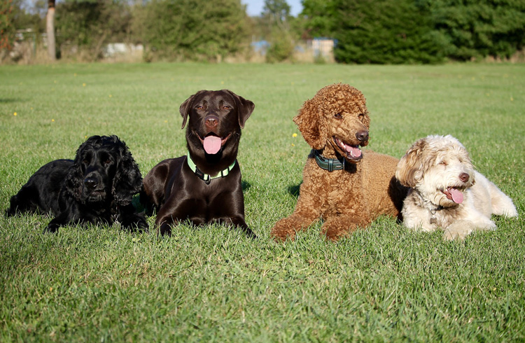 Image of group of different dog breeds