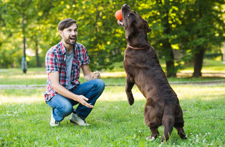 Image of happy man training black dog