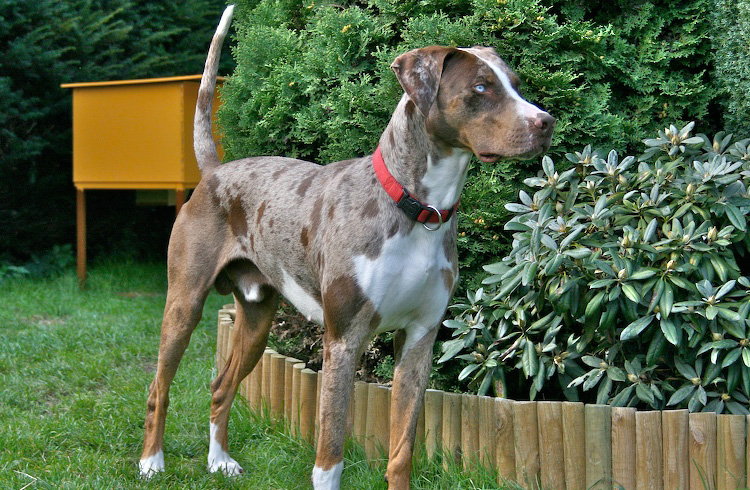 5 Best Dog Food For Catahoula In 2019 Our Reviews And