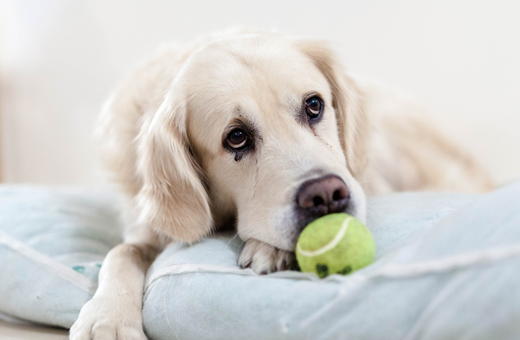 Image of sad dog and green ball