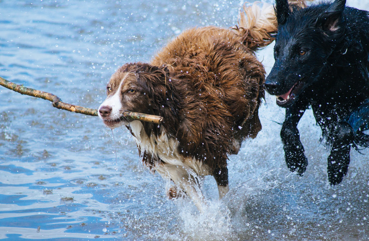 Image of two Active Dogs