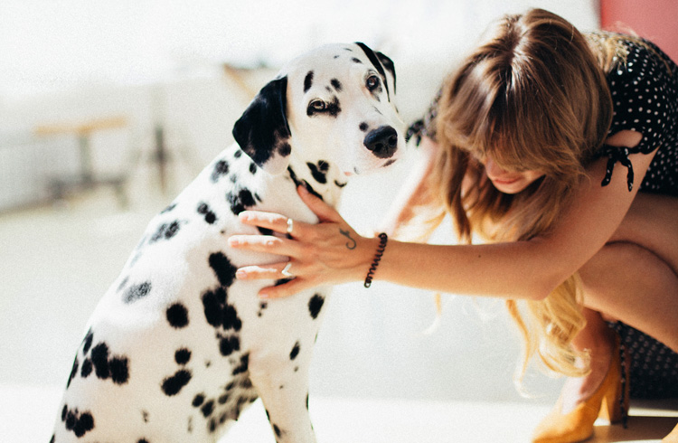 Image of woman taking care of dalmatian dog