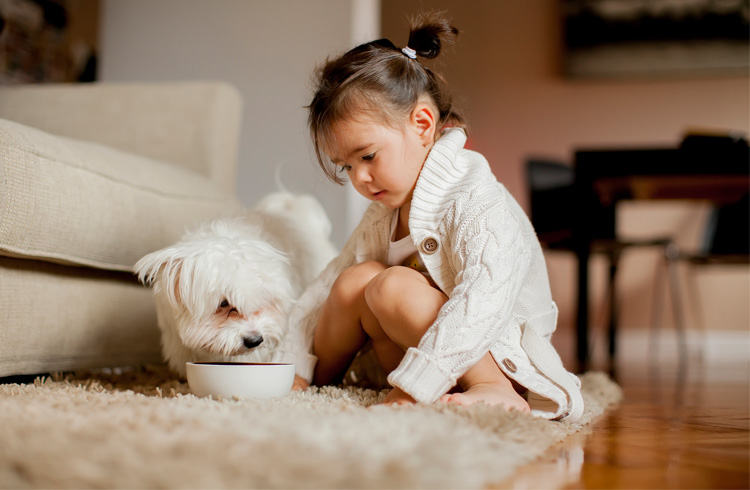 image of fluffy dog eating and little girl cuddling him