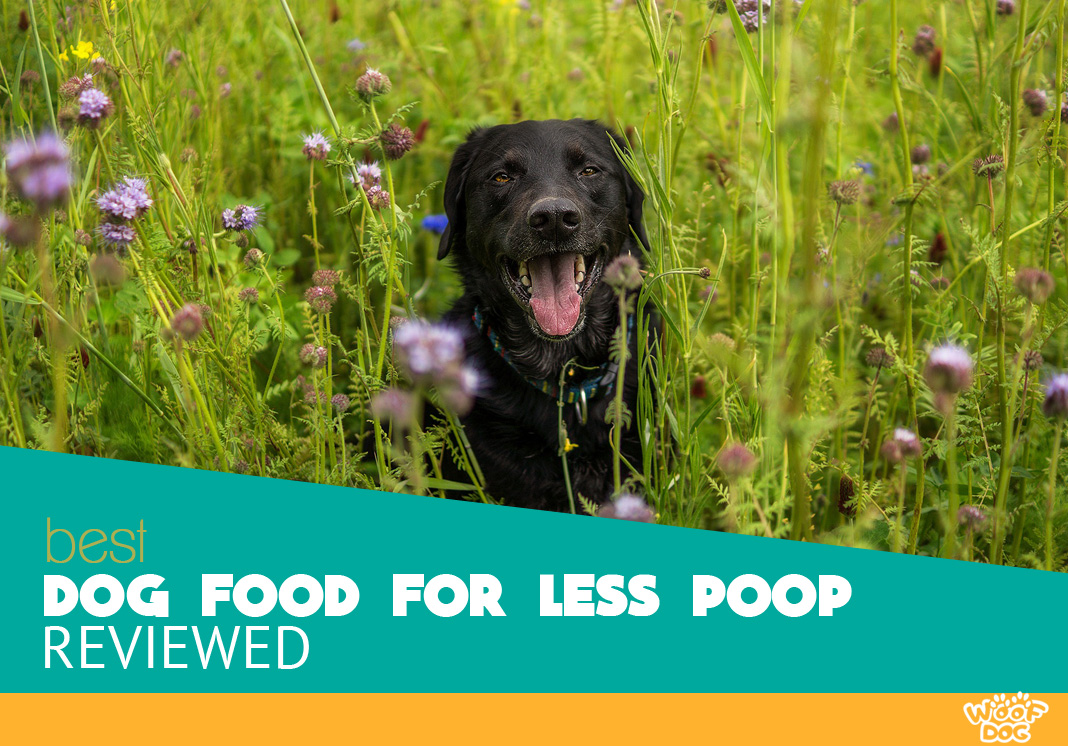 Featured image of black dog hidden in tall grass