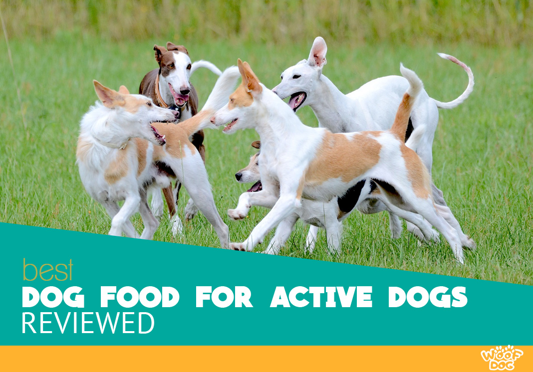 Featured image of five active dogs