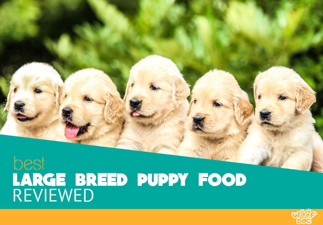 Featured image of five cute retriever puppies