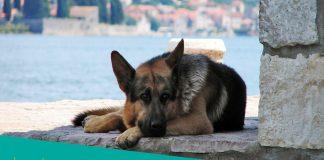 Featured image of sad canine near the sea