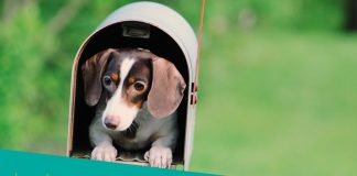Featured image of small dog inside mailbox