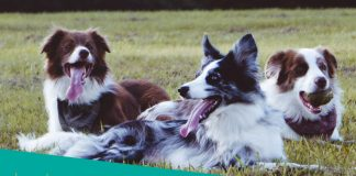 Featured image of three dogs on grass