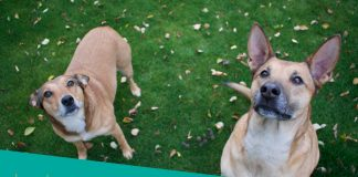 Featured image of two dogs looking up