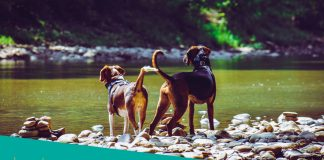 Featured image of two dogs near river