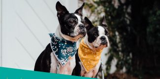 Featured image of two dogs with bandanas waiting for food
