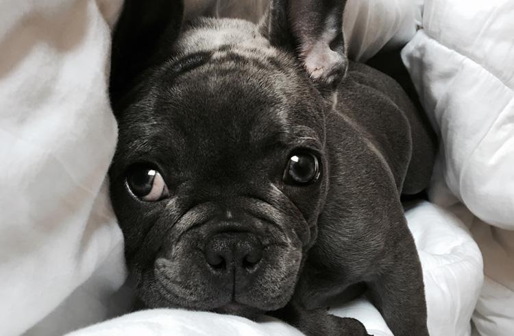Image od dog hidden between pillow and cushion