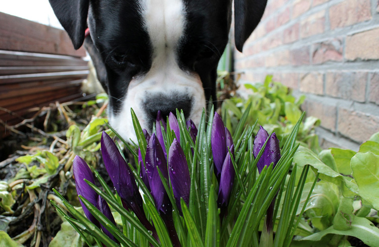 Image of canine and flowers