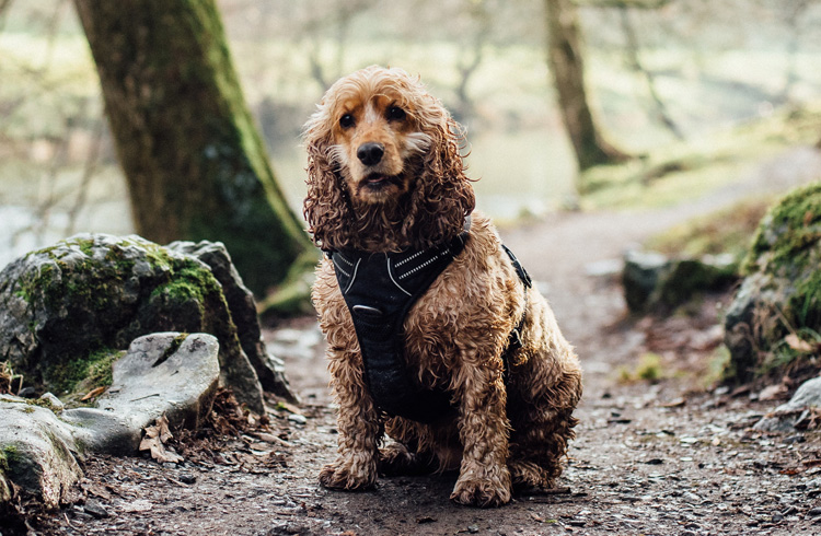 Image of cute dog in the forest