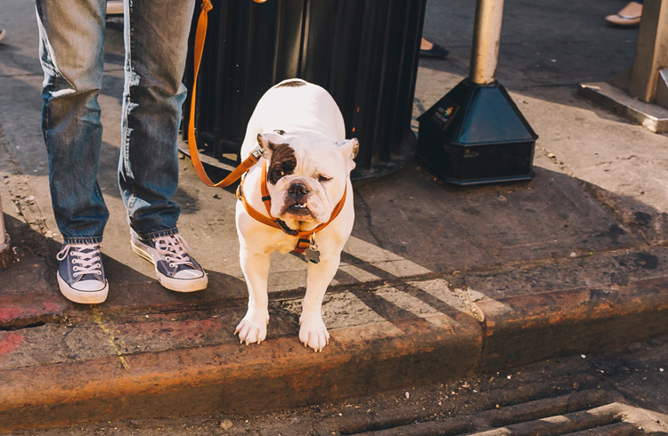Image of dog with leash