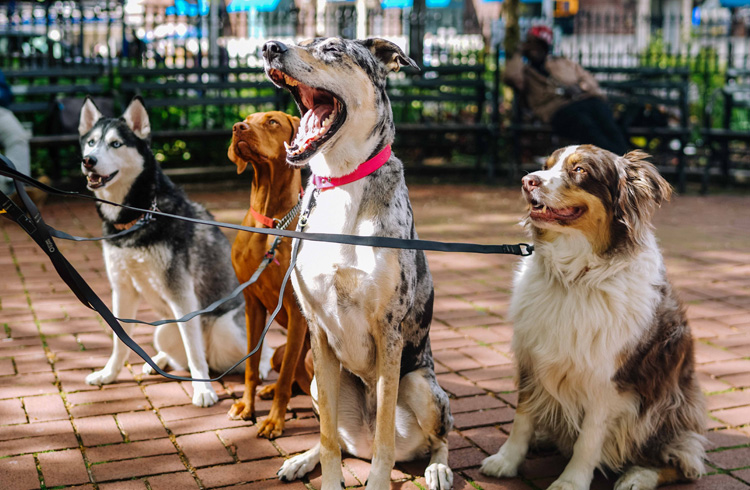 How To Pick A Dog Food For Joint Issues