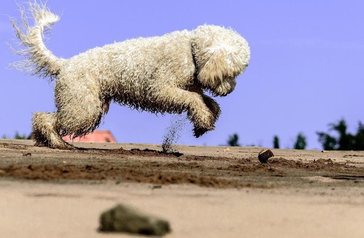 Image of happy dog jumping