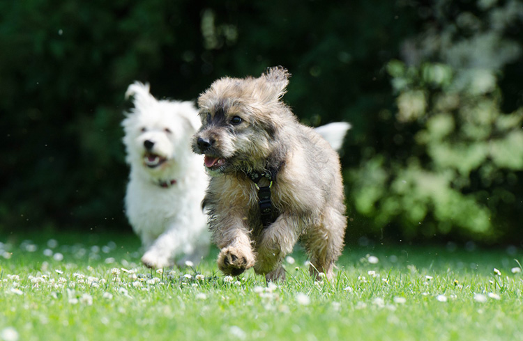 Image of two small active dogs