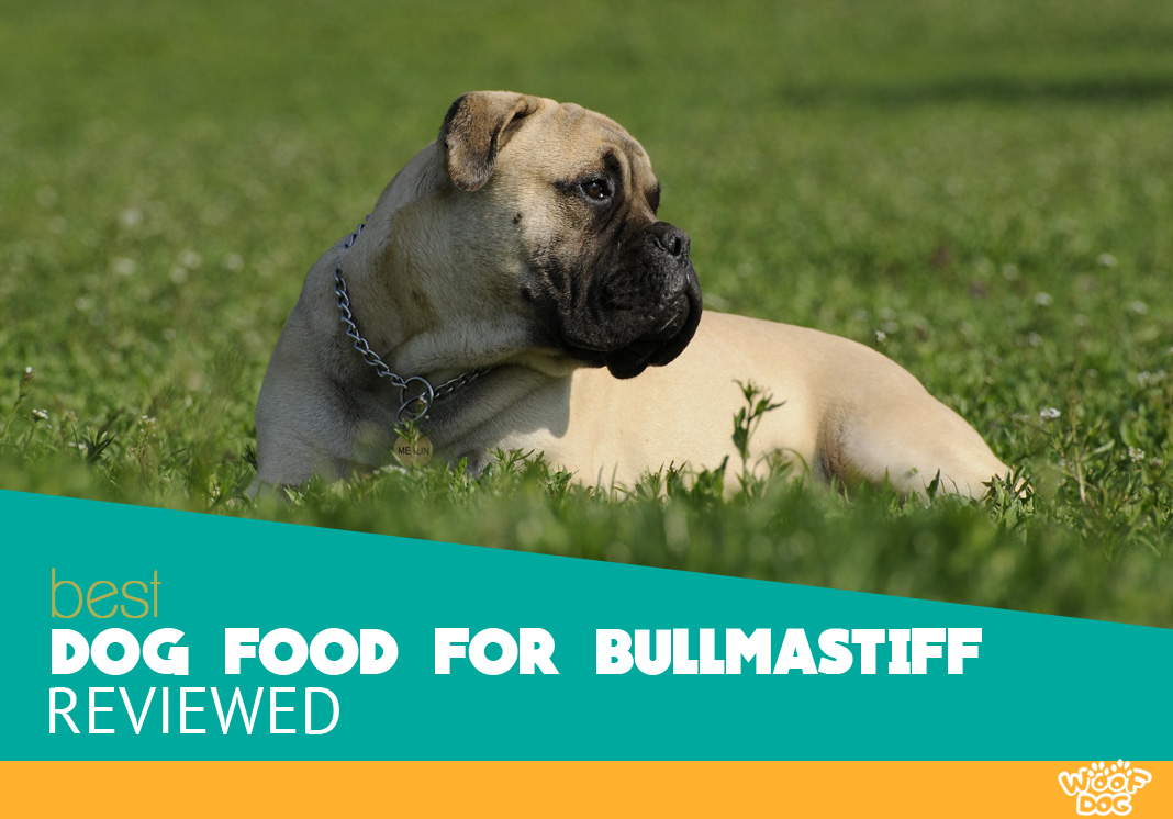 Featured image of Bullmastiff dog lying in the grass