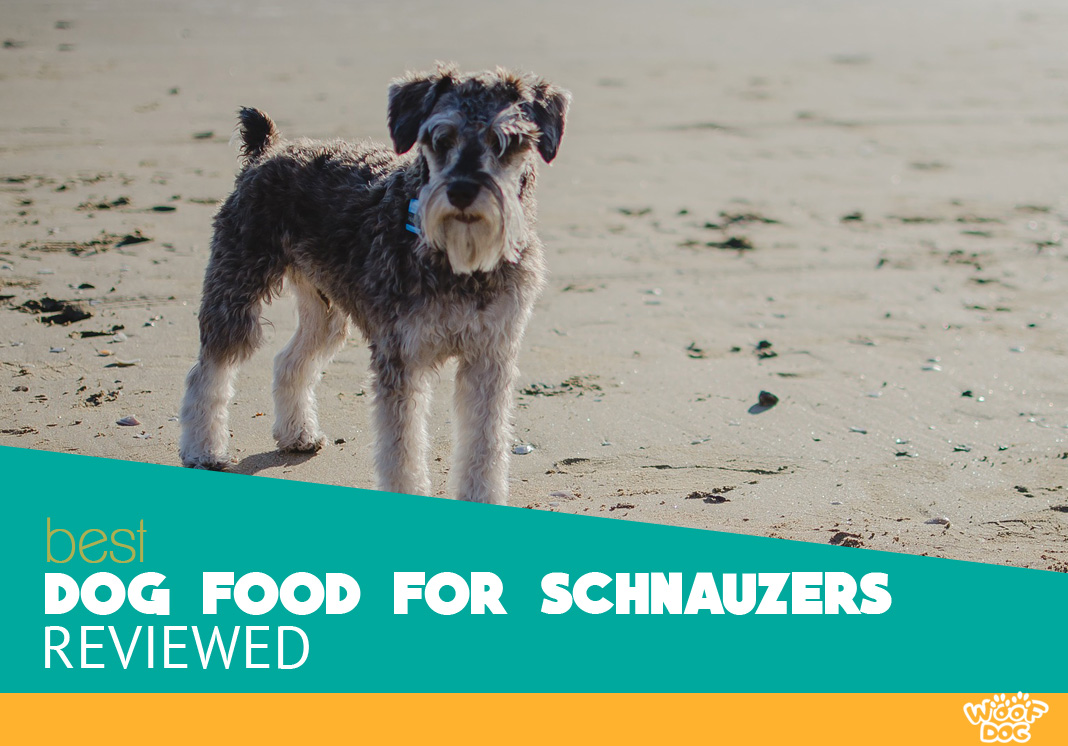 Best Dog Food For Schnauzers Top 7