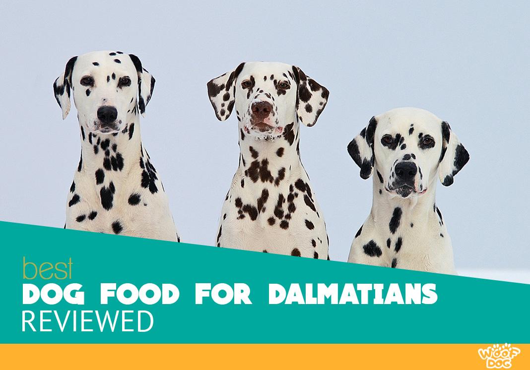Featured image of three dalmatians