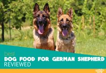 Featured image of two German Shepherd dogs