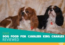 Featured image of two cavalier king charles dogs