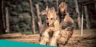 Featured image of two dogs running
