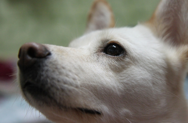 Image of adorable white dog focus