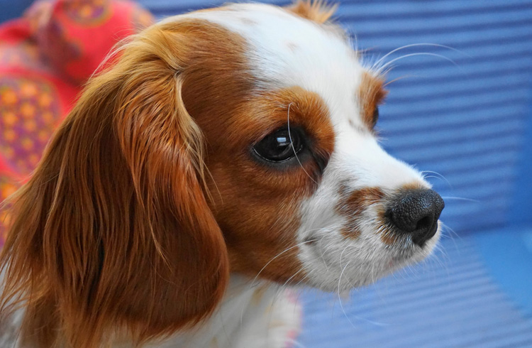 Image of cute dog with orange ears