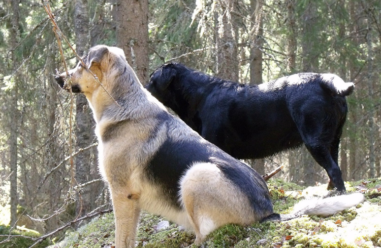 Image of two dogs from the back